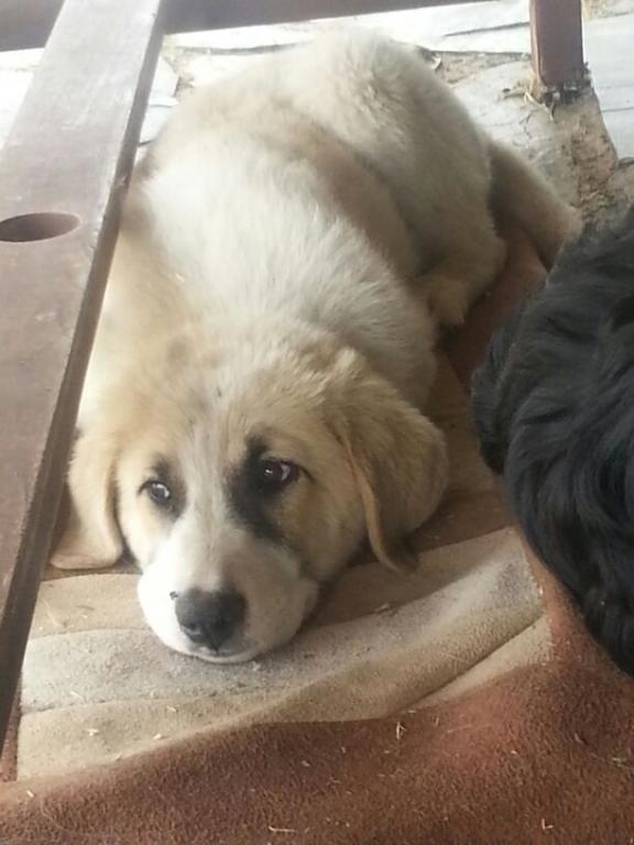 Nati the puppy