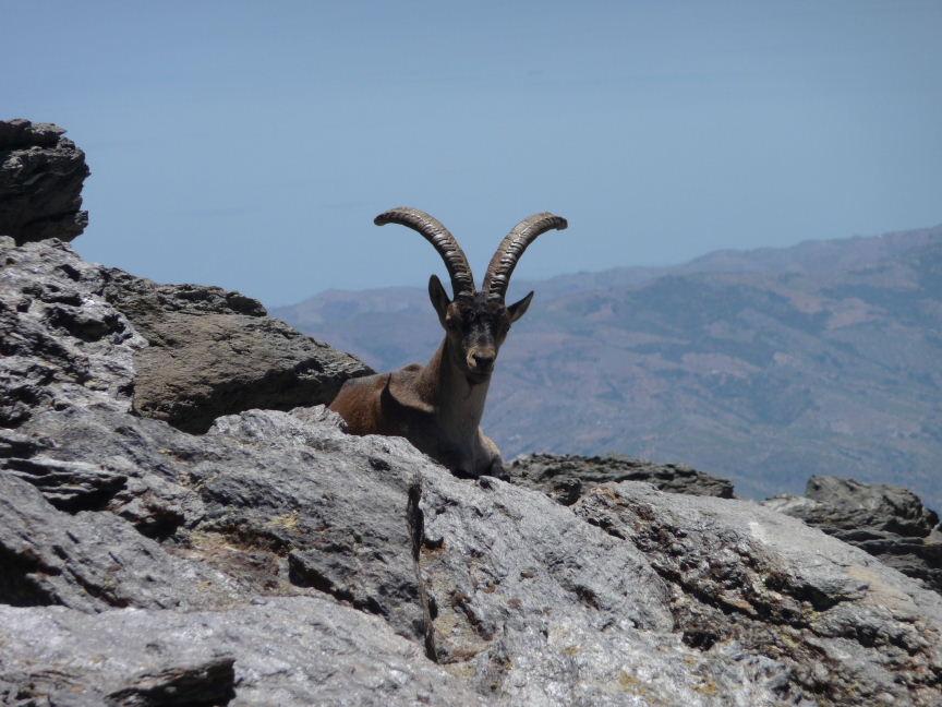 Sierra Nevada flora and fauna